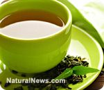 Green tea helps maintain functional ability and prevent cognitive decline as we age by John Phillip on Natural News