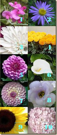 10 flowers that wont wilt