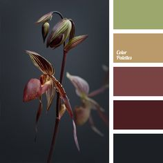 The palette of cool colors blending smoothly from almost black color to swampy-green. Green shade gives this range of dark shades a light note. These colors will be appropriate in a strict business suit of office employee. They can also be used for a rigorous decoration of offices, and for study design.