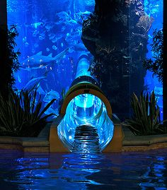 """Toboagua por dentro do aquario em Vegas... """"Porque tudo que existe pode ser transformado em uma arte ainda maior."""" What she said :) pretty sure it's in Las Vegas"""