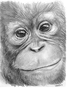 Orangutang i grafit från gregchapin. Pencil Drawings Of Animals, Animal Sketches, Art Drawings Sketches, Cute Drawings, Draw Animals, Monkey Drawing, Monkey Art, Orang Utan, Scratchboard