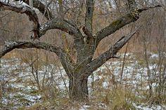 Тупик.Ru: Заковыристые деревья*