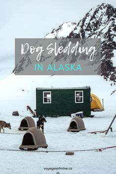 Dog sledding is one of those activities that makes it onto many people's bucket lists. Luckily, it is fun and easy to do in Alaska! Read our guide on how you can go dog sledding in Alaska. Usa Travel Guide, Travel Usa, Travel Guides, Travel Tips, Travel Destinations, Alaska Travel, Canada Travel, Alaska Cruise, Road Trip Usa