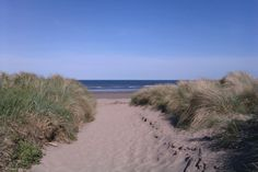 The West Sands in St Andrews look inviting through the dunes. 25 May 13.