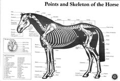Great horseskelton view with labels.
