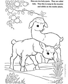 Farm Animal coloring pages - goats page to print and color