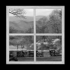 A rustic window frames a springtime display of blooming dogwood trees and a rail fence at the John Oliver cabin in Cades Cove. This black and white Smoky Mountain scene is also available in color.