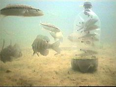 Image result for how to make a minnow trap