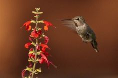 Tiny hummingbirds a big draw for tourists - Itineraries