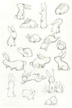 Practice rabbits