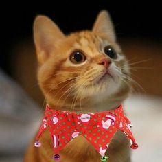 Xmas Cat Collars Adjustable Neckties with Bells Neck Range 20~45cm (3 Colors) #Allacki
