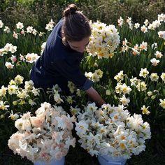 """12.1 χιλ. """"Μου αρέσει!"""", 65 σχόλια - Erin Benzakein - Floret (@floretflower) στο Instagram: """"We should be picking these beauties in a matter of weeks. I can't wait! Ok, last reminder to sign…"""""""