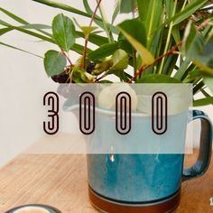 As our webshop turned 2 years old, our Instagram @astialiisa has reached 3000 followers. We could not have wished for a better birthday present. Thank you to all our amazing followers! 🎀 🎀 Enjoy our birthday campaign: 🎁 Special deals & prices 🎁 Tomula quiz & Giveaway! → win a pair of #coffeecups 🎁 Nordic vintage dishes video #nordicvintage #nordicvintagedishes #vintagedishes #arabiafinland #ARABIA #Iittala #arabiavintage #arabiadishes #scandinavianvintage #nordicdesign #finnishdesign Good Birthday Presents, Best Birthday Gifts, 2nd Birthday, Vintage Cups, Vintage Dishes, 2nd Anniversary, Romantic Dinners, Special Deals, Nordic Design