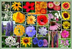 Eden Brothers Southeast Wildflower Seed Mix 1 Pound *** Check this awesome image  : Gardening Flowers