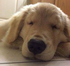Sleepy teddy bear.