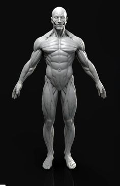 ✋This is a high poly model of the 😱  male human figure with extremely accurate anatomy. I would be very impressed if you found a more accurate model anywhere else!Shows the outer muscle layer. 3d modeling character 3d modeling human