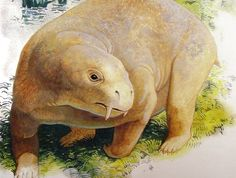 """""""The dicynodont was an early ancestor of modern-day mammals and lived about 250 million years ago. Roughly the size of a cow, the plant-eating animal had two tusks and a horny beak."""""""