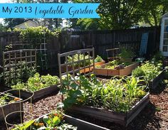 Vegetable Gardening 101 - how to site and plan out your vegetable garden plus other beginner gardening tips