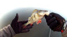 La Magie de la Pêche au Drop Shot du bord.......NK59