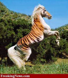 tiger-horse
