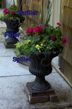 1-2-3 Recipe for a Successful Annual Container Planting