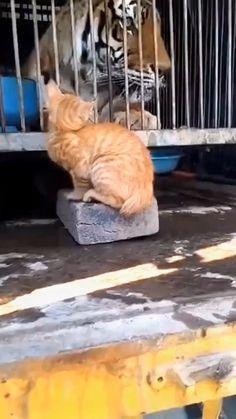 Funny Cute Cats, Cute Cat Gif, Cute Kittens, Cute Funny Animals, Cutest Kittens Ever, Funny Cat Faces, Cutest Pets, Funny Cats And Dogs, Funny Pets