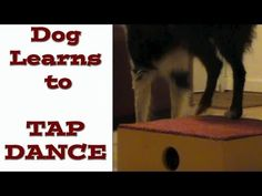 """Bandit is learning a cue that I am calling """"Tap Dance"""" because it kind of looks like he is tap dancing."""