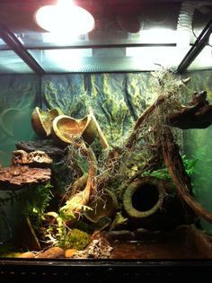 Crocodile skink cage setup - photo#28