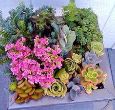 The Stack #succulents #mod #container #gardening #TerrabyTerri #terrariums #ecofriendly #upcycled #modern  $75