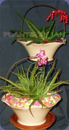 Aloe & Gasteria centerpieces