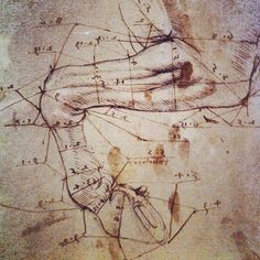 Leonardo Da Vinci anatomy drawing museum tour - horse leg, looks like God CAD (as is computer aided design that God would have used when created our planets beautiful animals) by Spin Cyclz, via Flickr