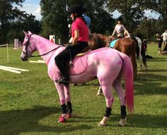 Gorgeous pink breast cancer awareness horse.