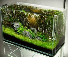 beautifully aquascaped aquarium