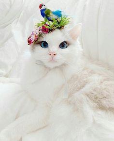 Winter T Shirts, Summer Tshirts, Animals And Pets, Cute Animals, Cute Cat Wallpaper, Purple Cat, Cat Accessories, Cute Tshirts, T Shirt Diy
