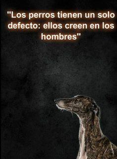 Los perros...