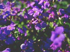 a lot of purple by Karo Solo  #purple #nature #flowers #photography #spring