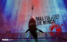 ¡Más fuertes que nunca! #Veracruz #LigraficaMX