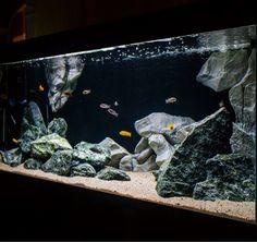 aquarium backgrounds and aquarium decorations - Aquadecor - Aquarien Malawi Aquarium, Cichlid Aquarium, Aquarium Fish Tank, Jellyfish Aquarium, Fish Aquarium Decorations, Aquarium Setup, Aquarium Design, Aquarium Landscape, Nature Aquarium