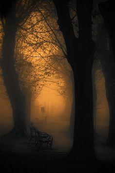 Mist in the park ~ quiet beauty