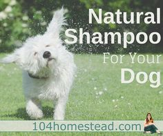 With oatmeal for sensitive skin, coconut oil for moisture, baking soda for funky odors, and essential oils to keep fleas at bay, you'll love this natural DIY dog shampoo.