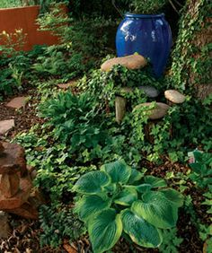 Even in hot, dry climates, a shady spot can support ferns, hostas, and English ivy (Hedera helix* cvs., Zones 5–11).