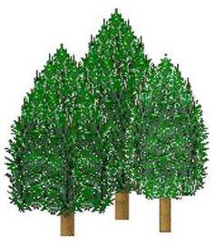 Pine Tree Clip Art - Bing images Pine Tree Art, Bing Images, Clip Art, Plants, Plant, Planets, Pictures