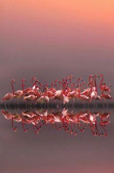 flamingos with their gracious silhouettes