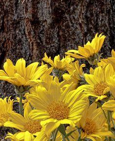 Wildflowers at Lake Tahoe in full bloom South Lake Tahoe, Wildflowers, Nevada, Luxury Homes, Tattoo Ideas, Bloom, Real Estate, Tattoos, Plants