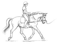 Dressage Today Article: Achieving a Supple Seat