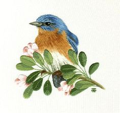 Work in Progress of a Eastern Blue Bird on Blossom Branch: Needle Painting, Hand Embroidery Designs as an Alternative to Cross-stitch. Eastern Blue Bird Needle Painting or Thread Painting Hand Embroidery by Tanja Berlin: Berlin Embroidery Designs. Long an Crewel Embroidery Kits, Blackwork Embroidery, Paper Embroidery, Silk Ribbon Embroidery, Hand Embroidery Designs, Embroidery Patterns, Indian Embroidery, Stitch Patterns, Images D'art