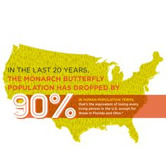 To learn more about monarchs, click here: http://ow.ly/ENbc0
