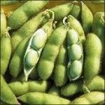 """The Truth About Soy - by John Robbins, Food Revolution Network Blog. A balanced informative article, which concludes that """"the anti-soy crusade has needlessly frightened many away from a food source that has long been a boon to humankind, a food source that can, if we are respectful of our bodies and of nature, nourish and bless us in countless ways."""""""