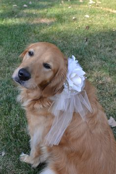 Flower Dogs: gorgeous tulle collar in custom colors - fuss-free wedding dog collar. $35.00, via Etsy.
