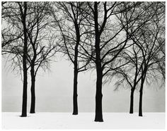 Harry Callahan, Chicago, Trees in Snow, 1950
